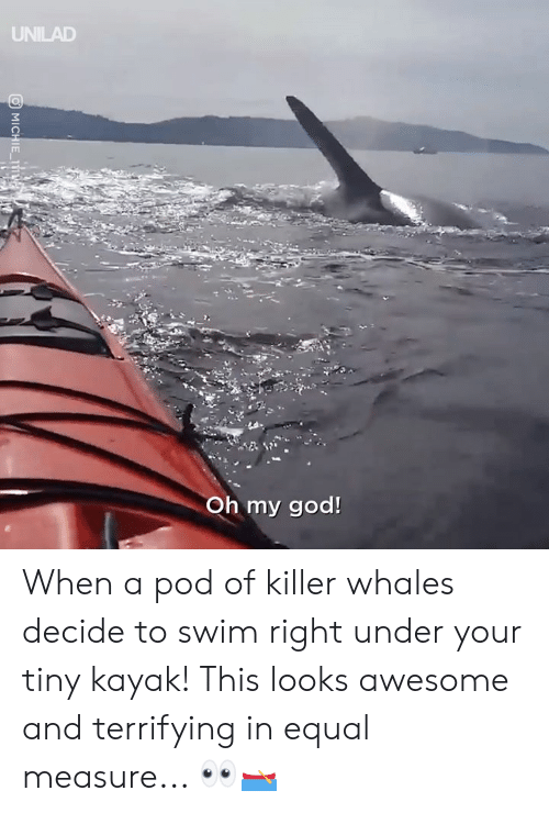 Dank, God, and Killer Whales: UNILAD  Oh my god! When a pod of killer whales decide to swim right under your tiny kayak! This looks awesome and terrifying in equal measure... 👀🛶