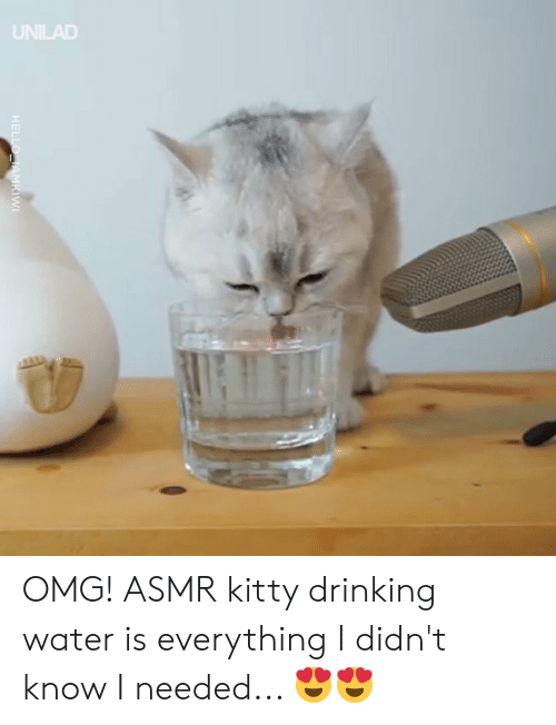 Dank, Drinking, and Omg: UNILAD OMG! ASMR kitty drinking water is everything I didn't know I needed... 😍😍