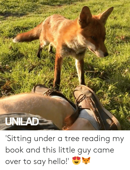 Dank, Hello, and Book: UNILAD 'Sitting under a tree reading my book and this little guy came over to say hello!' 😍🦊