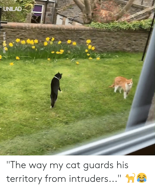 "Dank, 🤖, and Cat: UNILAD ""The way my cat guards his territory from intruders..."" 🐈😂"