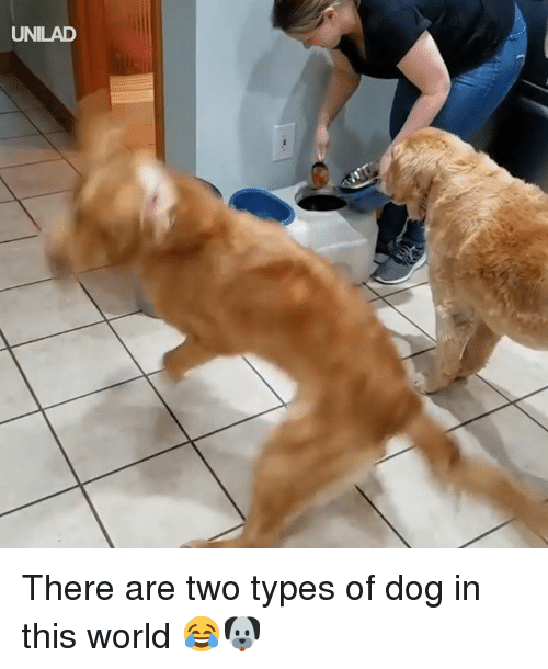 Dank, World, and 🤖: UNILAD There are two types of dog in this world 😂🐶