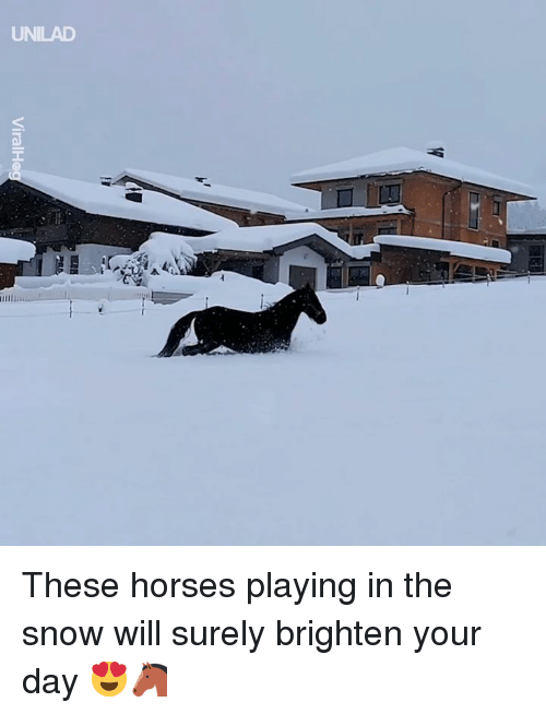 Dank, Horses, and Snow: UNILAD These horses playing in the snow will surely brighten your day 😍🐴