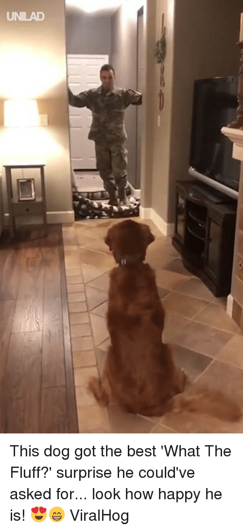 Dank, Best, and Happy: UNILAD This dog got the best 'What The Fluff?' surprise he could've asked for... look how happy he is! 😍😁  ViralHog