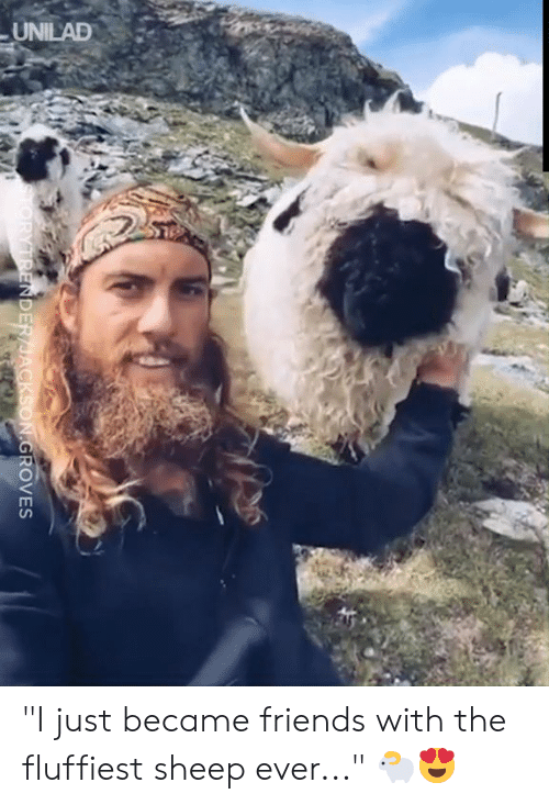 "Dank, Friends, and 🤖: UNILAD  TORYTRENDER/JACKSON.GROVES ""I just became friends with the fluffiest sheep ever..."" 🐑😍"