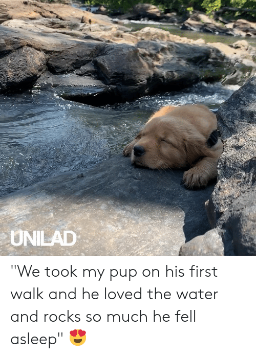 """Dank, Water, and Pup: UNILAD """"We took my pup on his first walk and he loved the water and rocks so much he fell asleep"""" 😍"""