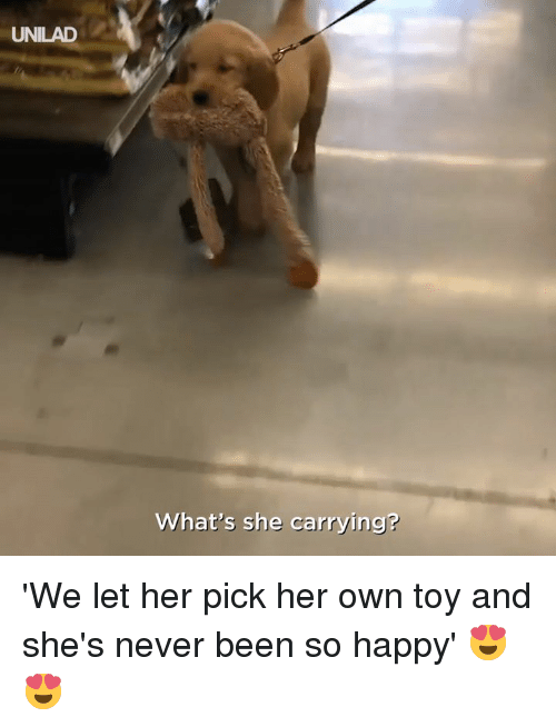 Dank, Happy, and Never: UNILAD  What's she carrying? 'We let her pick her own toy and she's never been so happy' 😍😍