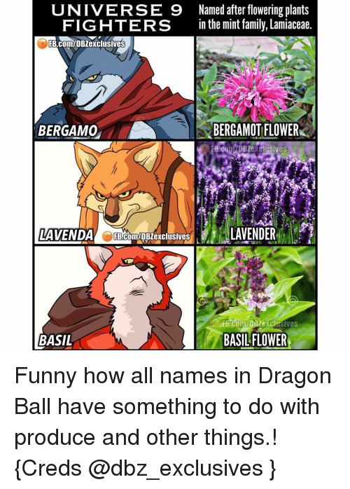 Memes, 🤖, and Dragon Ball: UNIVERSE 9 Named after flowering plants  FIGHTERS  in the mint family, Lamiaceae.  RB.ComIDBZexclusives  BERGAMOT FLOWER  BERGAMO  LAVENDER  LAVENDA FB.com/DB exclusives  BASIL FLOWER  BASIL Funny how all names in Dragon Ball have something to do with produce and other things.! {Creds @dbz_exclusives }