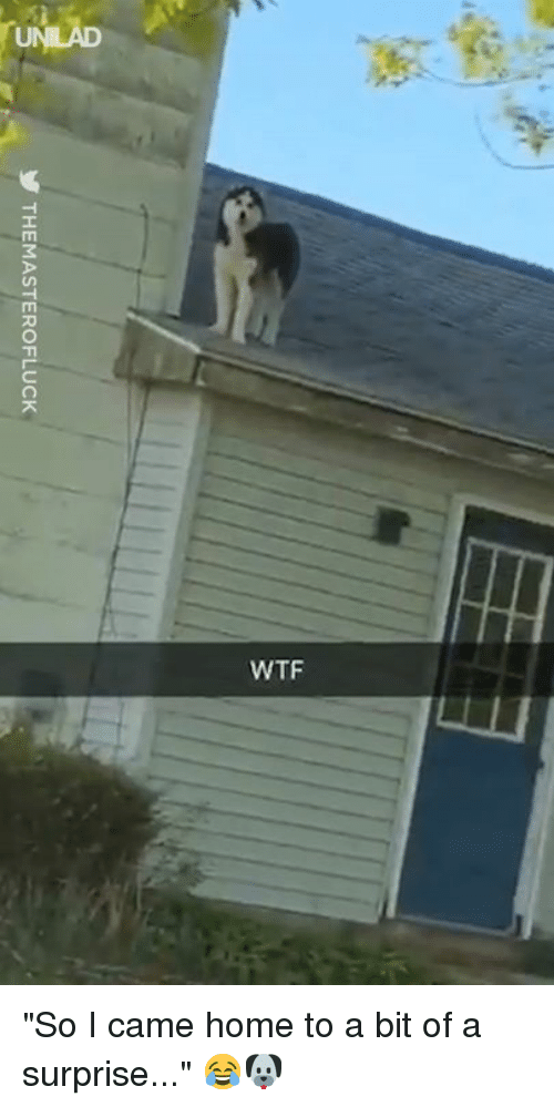 """Dank, Wtf, and Home: UNLAD  WTF """"So I came home to a bit of a surprise..."""" 😂🐶"""