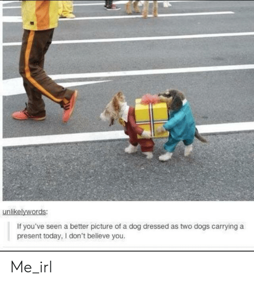 Dogs, Today, and Irl: unlikelywords:  If you've seen a better picture of a dog dressed as two dogs carrying a  present today, I don't believe you. Me_irl