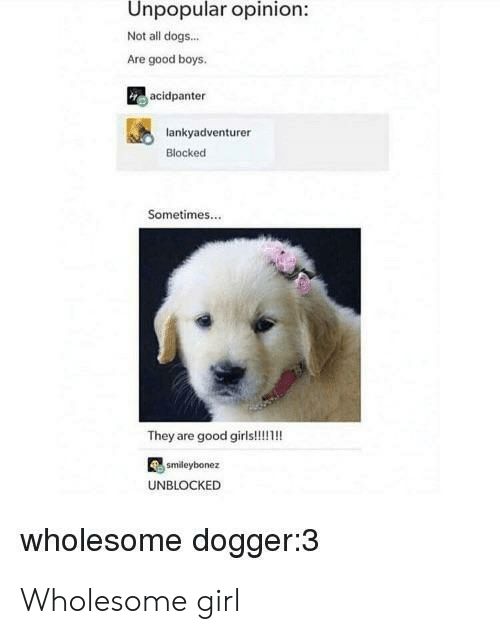 Dogs, Girl, and Good: Unpopular opinion:  Not all dogs...  Are good boys  acidpanter  lankyadventurer  Blocked  Sometimes...  smdeybonez  UNBLOCKED  wholesome dogger:3 Wholesome girl