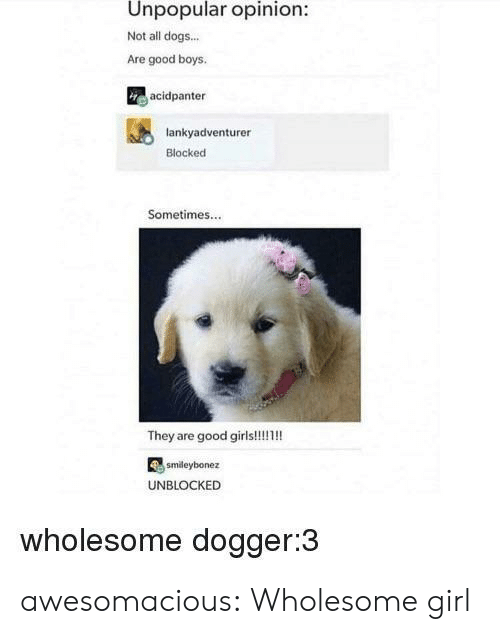 Dogs, Tumblr, and Blog: Unpopular opinion:  Not all dogs...  Are good boys  acidpanter  lankyadventurer  Blocked  Sometimes...  smdeybonez  UNBLOCKED  wholesome dogger:3 awesomacious:  Wholesome girl