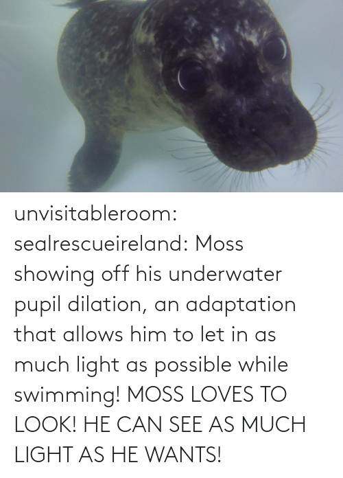 possible: unvisitableroom:  sealrescueireland: Moss showing off his underwater pupil dilation, an adaptation that allows him to let in as much light as possible while swimming! MOSS LOVES TO LOOK! HE CAN SEE AS MUCH LIGHT AS HE WANTS!