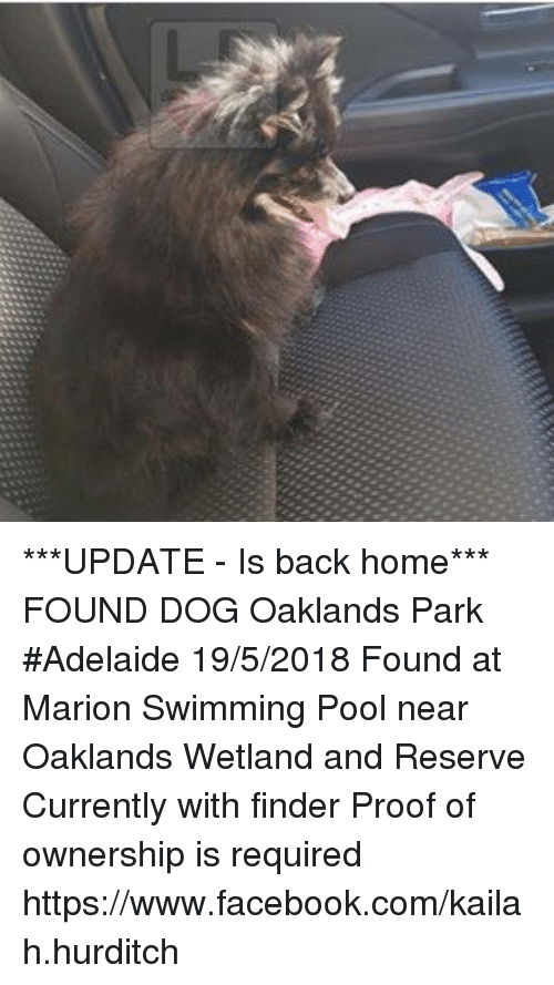 Facebook, Memes, and facebook.com: ***UPDATE - Is back home***  FOUND DOG Oaklands Park #Adelaide 19/5/2018 Found at Marion Swimming Pool near Oaklands Wetland and Reserve Currently with finder Proof of ownership is required https://www.facebook.com/kailah.hurditch