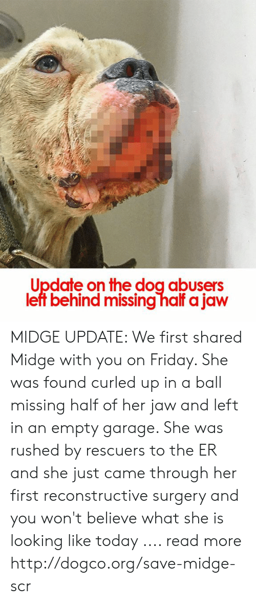 Friday, Memes, and Http: Update on the dog abusers  left behind missing half a jaw MIDGE UPDATE: We first shared Midge with you on Friday. She was found curled up in a ball missing half of her jaw and left in an empty garage. She was rushed by rescuers to the ER and she just came through her first reconstructive surgery and you won't believe what she is looking like today .... read more http://dogco.org/save-midge-scr