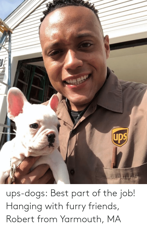the job: ups-dogs:  Best part of the job! Hanging with furry friends, Robert from Yarmouth, MA