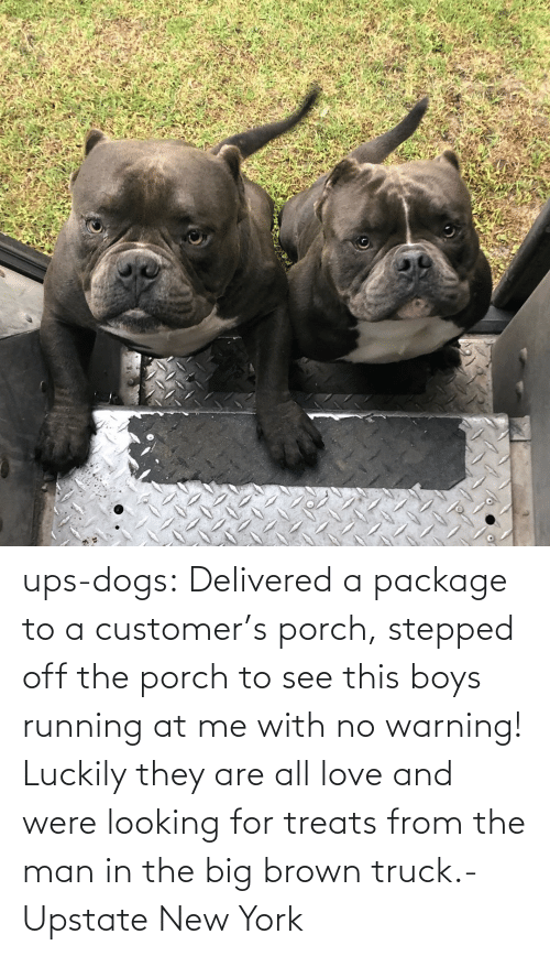 Running: ups-dogs:  Delivered a package to a customer's porch, stepped off the porch to see this boys running at me with no warning! Luckily they are all love and were looking for treats from the man in the big brown truck.- Upstate New York