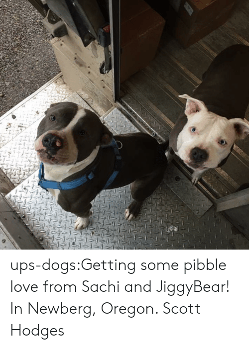 Dogs, Love, and Target: ups-dogs:Getting some pibble love from Sachi and JiggyBear! In Newberg, Oregon. Scott Hodges