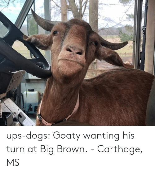 Dogs: ups-dogs:  Goaty wanting his turn at Big Brown.- Carthage, MS