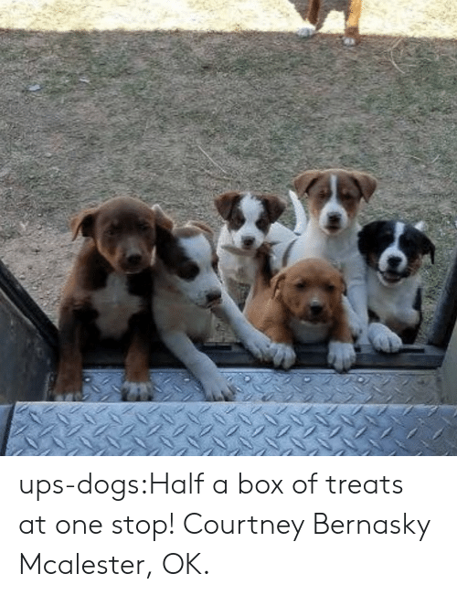 Dogs, Target, and Tumblr: ups-dogs:Half a box of treats at one stop! Courtney Bernasky Mcalester, OK.