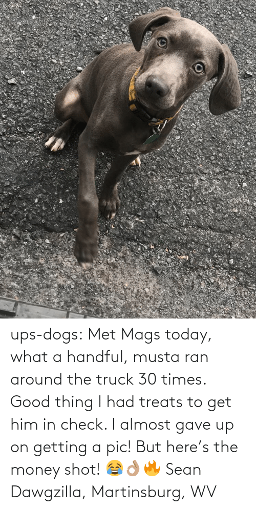 shot: ups-dogs:  Met Mags today, what a handful, musta ran around the truck 30 times. Good thing I had treats to get him in check. I almost gave up on getting a pic! But here's the money shot! 😂👌🏽🔥 Sean Dawgzilla, Martinsburg, WV