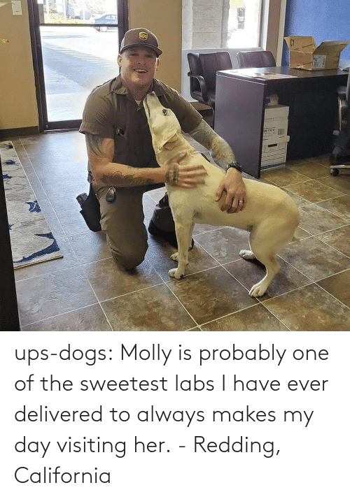 molly: ups-dogs:  Molly is probably one of the sweetest labs I have ever delivered to always makes my day visiting her. - Redding, California