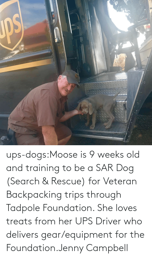 foundation: ups-dogs:Moose is 9 weeks old and training to be a SAR Dog (Search & Rescue) for Veteran Backpacking trips through Tadpole Foundation. She loves treats from her UPS Driver who delivers gear/equipment for the Foundation.Jenny Campbell