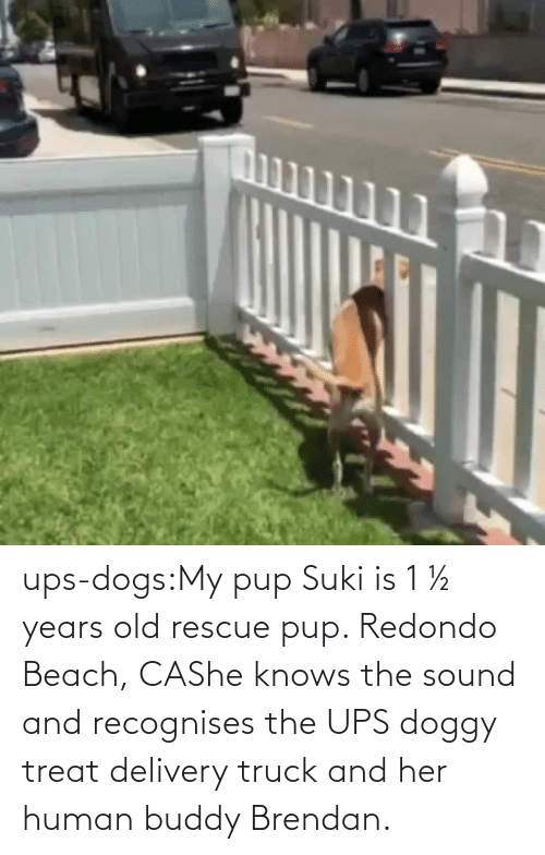 Years Old: ups-dogs:My pup Suki is 1 ½ years old rescue pup. Redondo Beach, CAShe knows the sound and recognises the UPS doggy treat delivery truck and her human buddy Brendan.