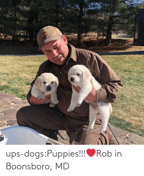 Puppies: ups-dogs:Puppies!!!❤️Rob in Boonsboro, MD
