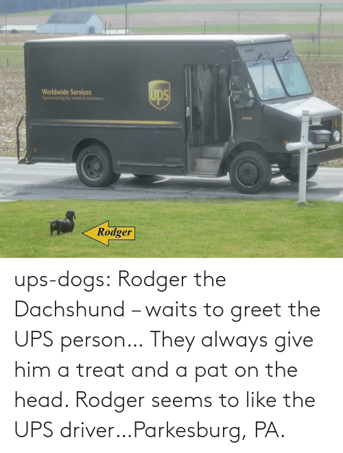 person: ups-dogs:  Rodger the Dachshund – waits to greet the UPS person… They always give him a treat and a pat on the head. Rodger seems to like the UPS driver…Parkesburg, PA.