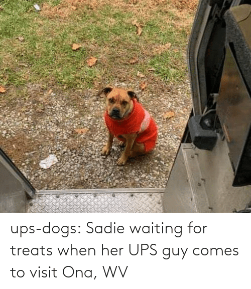 sadie: ups-dogs:  Sadie waiting for treats when her UPS guy comes to visit Ona, WV