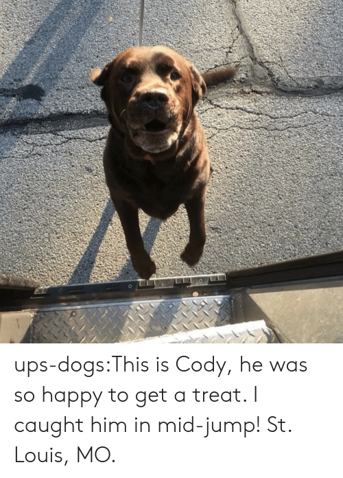 St Louis: ups-dogs:This is Cody, he was so happy to get a treat. I caught him in mid-jump! St. Louis, MO.