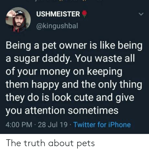 sugar daddy: USHMEISTER  @kingushbal  Being a pet owner is like being  a sugar daddy. You waste all  of your money on keeping  them happy and the only thing  they do is look cute and give  you attention sometimes  4:00 PM 28 Jul 19 Twitter for iPhone The truth about pets