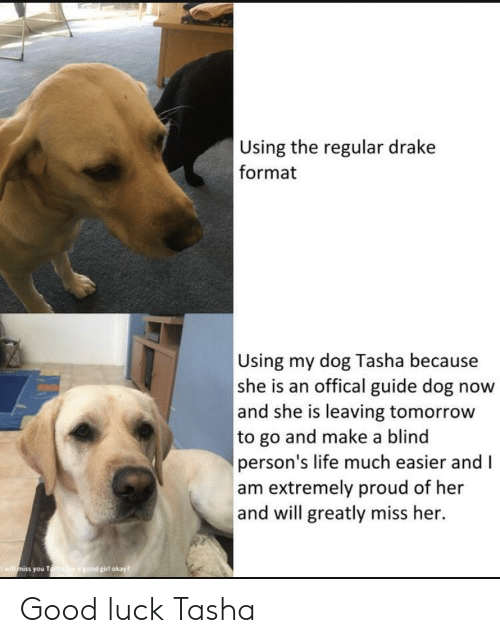 Drake, Life, and Girl: Using the regular drake  format  Using my dog Tasha because  she is an offical guide dog now  and she is leaving tomorrow  to go and make a blind  person's life much easier and I  am extremely proud of her  and will greatly miss her.  girl okay  you T Good luck Tasha