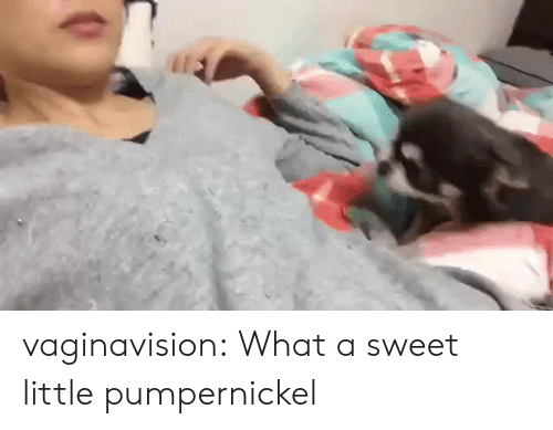 Target, Tumblr, and Blog: vaginavision: What a sweet little pumpernickel