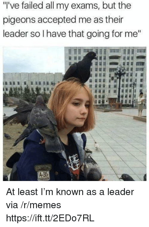 """Memes, Accepted, and Via: """"'ve failed all my exams, but the  pigeons accepted me as thei  leader so l have that going for me"""" At least I'm known as a leader via /r/memes https://ift.tt/2EDo7RL"""