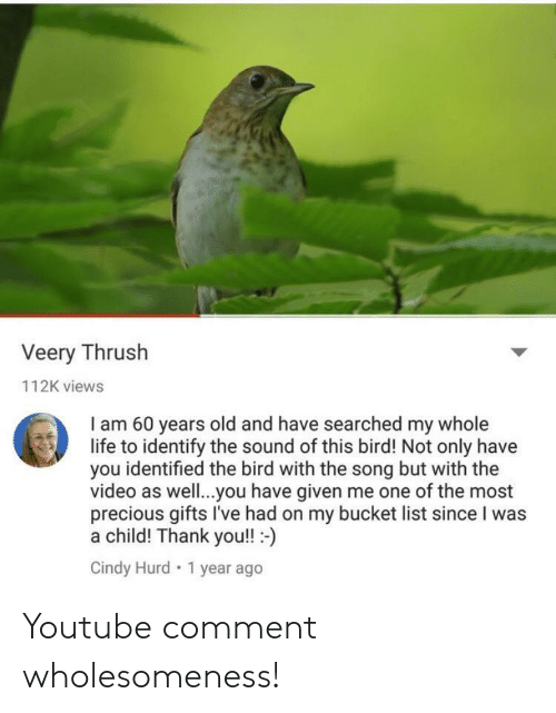 Bucket List, Life, and Precious: Veery Thrush  112K views  am 60 years old and have searched my whole  life to identify the sound of this bird! Not only have  you identified the bird with the song but with the  video as well.. you have given me one of the most  precious gifts I've had on my bucket list since I was  a child! Thank you!! -)  Cindy Hurd 1 year ago Youtube comment wholesomeness!