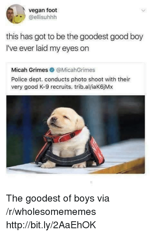 Police, Vegan, and Good: vegan foot  @ellisuhhh  this has got to be the goodest good boy  I've ever laid my eyes on  Micah Grimes@MicahGrimes  Police dept. conducts photo shoot with their  very good K-9 recruits. trib.al/iaK6jMx The goodest of boys via /r/wholesomememes http://bit.ly/2AaEhOK