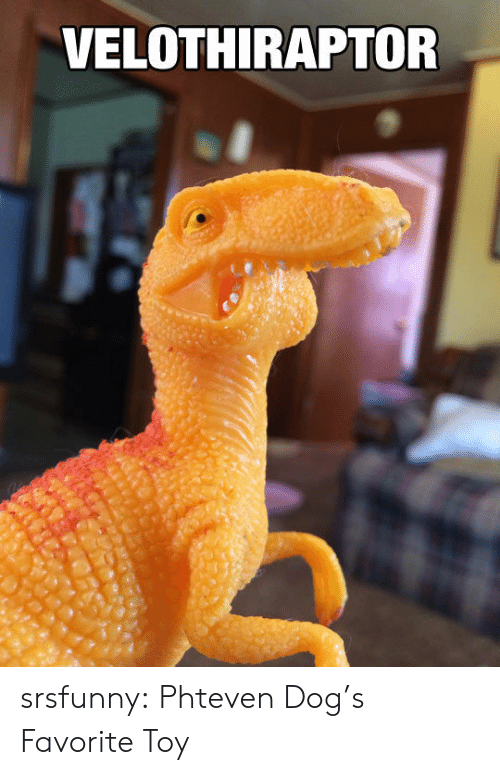 Dogs, Tumblr, and Blog: VELOTHIRAPTOR srsfunny:  Phteven Dog's Favorite Toy