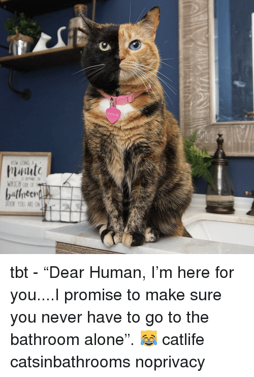 "Being Alone, Memes, and Tbt: veNds  OW LONG A  WHICH SIDE OF  DOOR YOU ARE ON tbt - ""Dear Human, I'm here for you....I promise to make sure you never have to go to the bathroom alone"". 😹 catlife catsinbathrooms noprivacy"