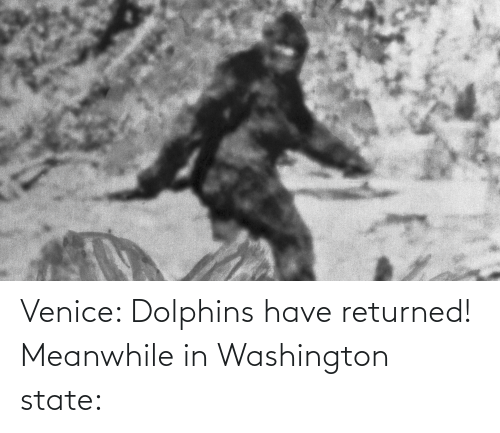 washington: Venice: Dolphins have returned! Meanwhile in Washington state: