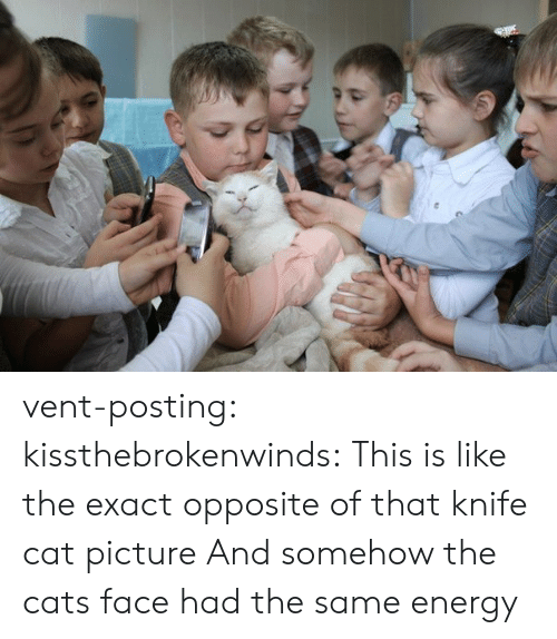 Exact: vent-posting:  kissthebrokenwinds: This is like the exact opposite of that knife cat picture  And somehow the cats face had the same energy