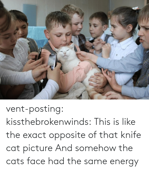 cat: vent-posting:  kissthebrokenwinds: This is like the exact opposite of that knife cat picture  And somehow the cats face had the same energy