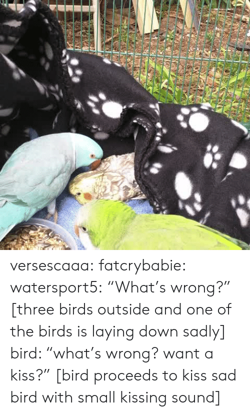 """Tumblr, Birds, and Blog: versescaaa:  fatcrybabie:  watersport5: """"What's wrong?"""" [three birds outside and one of the birds is laying down sadly] bird: """"what's wrong? want a kiss?"""" [bird proceeds to kiss sad bird with small kissing sound]"""