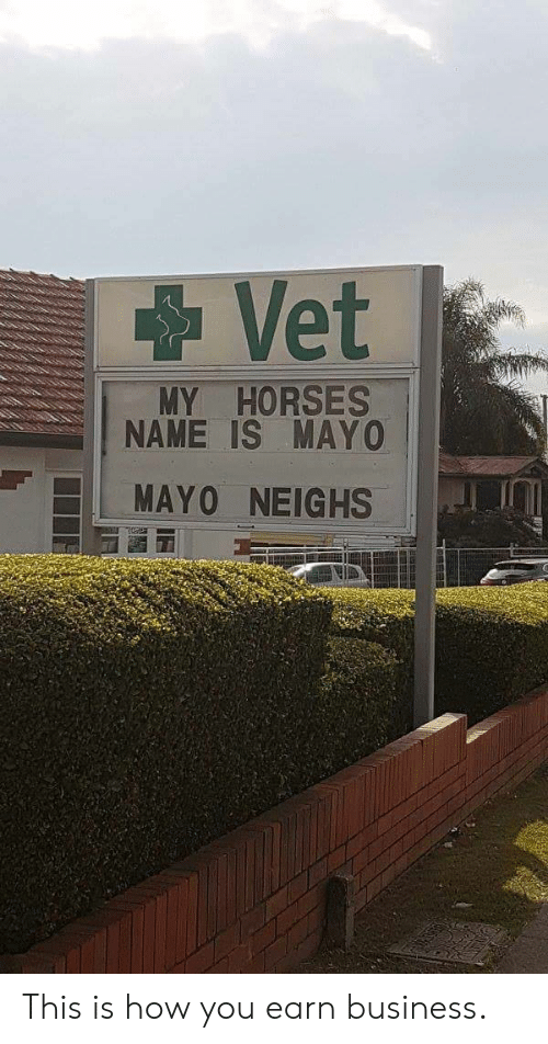 Horses, Business, and How: Vet  MY HORSES  NAME IS MAYO  MAY0 NEIGHS This is how you earn business.