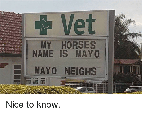Horses, Nice, and Name: Vet  MY HORSES  NAME IS MAYO  MAYO NEIGHS Nice to know.