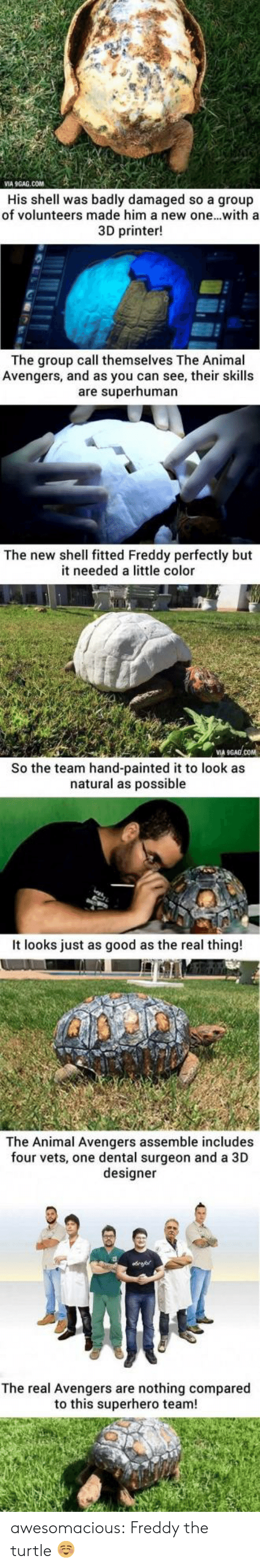 Fitted: VIA 9GAG.COM  His shell was badly damaged so a group  of volunteers made him a new one...witha  3D printer!  The group call themselves The Animal  Avengers, and as you can see, their skills  are superhuman  The new shell fitted Freddy perfectly but  it needed a little color  VIA  COM  So the team hand-painted it to look as  natural as possible  It looks just as good as the real thing!  The Animal Avengers assemble includes  four vets, one dental surgeon and a 3D  designer  The real Avengers are nothing compared  to this superhero team! awesomacious:  Freddy the turtle ☺️
