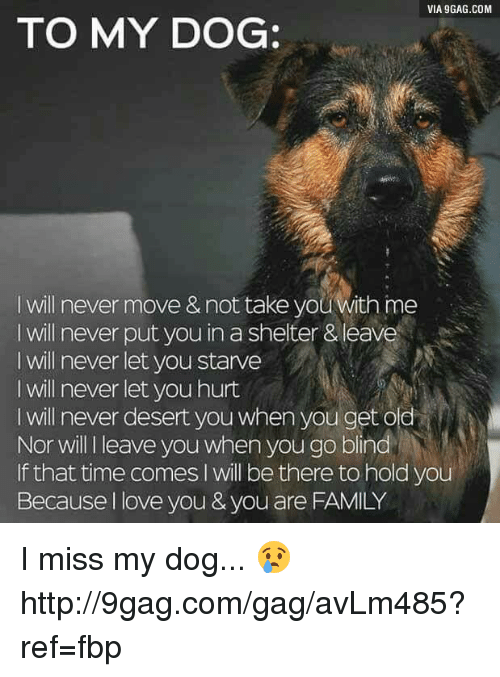 Dank, 🤖, and Dog: VIA 9GAG.COM  TO MY DOG:  I will never move &not take you With me  will never put you in a shelter &leave  I will never let you starve  l will never let you hurt  will never desert you when you get oled  Nor will leave you when you go blind  If that time comes l will be there to hold you  Because I love you & you are FAMILY I miss my dog... 😢 http://9gag.com/gag/avLm485?ref=fbp