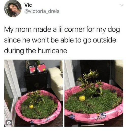 Funny, Hurricane, and Mom: Vic  @victoria dreis  My mom made a lil corner for my dog  since he won't be able to go outside  during the hurricane