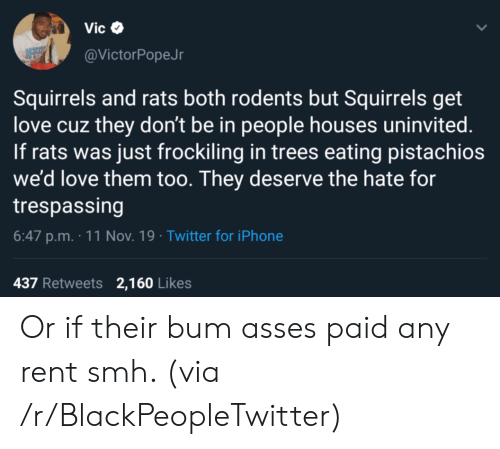 rent: Vic  @VictorPopeJr  Squirrels and rats both rodents but Squirrels get  love cuz they don't be in people houses uninvited.  If rats was just frockiling in trees eating pistachios  we'd love them too. They deserve the hate for  trespassing  6:47 p.m. 11 Nov. 19 Twitter for iPhone  437 Retweets 2,160 Likes Or if their bum asses paid any rent smh. (via /r/BlackPeopleTwitter)