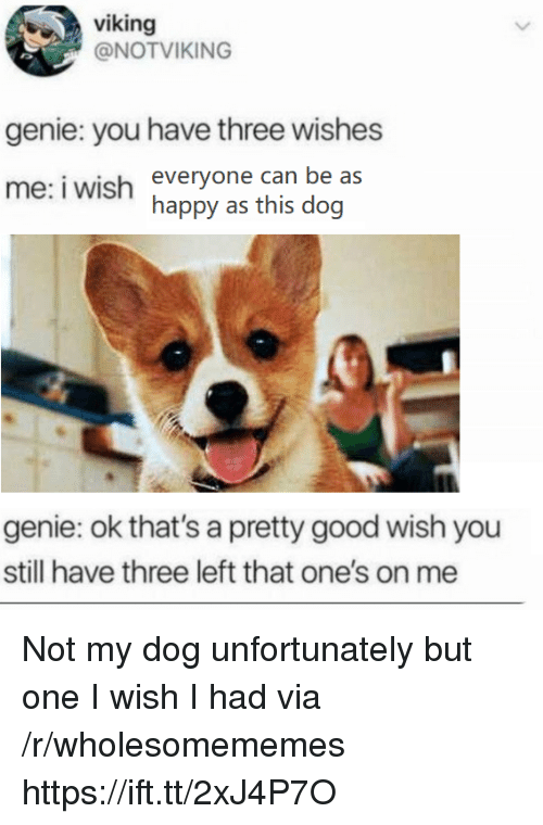 Good, Happy, and Viking: viking  @NOTVIKING  genie: you have three wishes  me: iwish everyone can be as  happy as this dog  genie: ok that's a pretty good wish you  still have three left that one's on me Not my dog unfortunately but one I wish I had via /r/wholesomememes https://ift.tt/2xJ4P7O